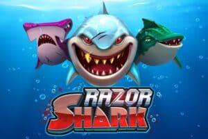 オンカジで「サメ」といえばレイザーシャーク!ギャンブル性特化の基本と攻略法
